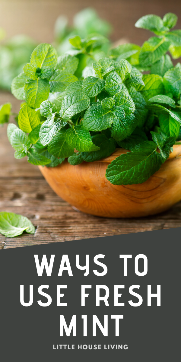 Do you grow mint in your garden or perhaps you may have picked up a little too much at the store this week? Find ways to use it up with all of these uses for mint!