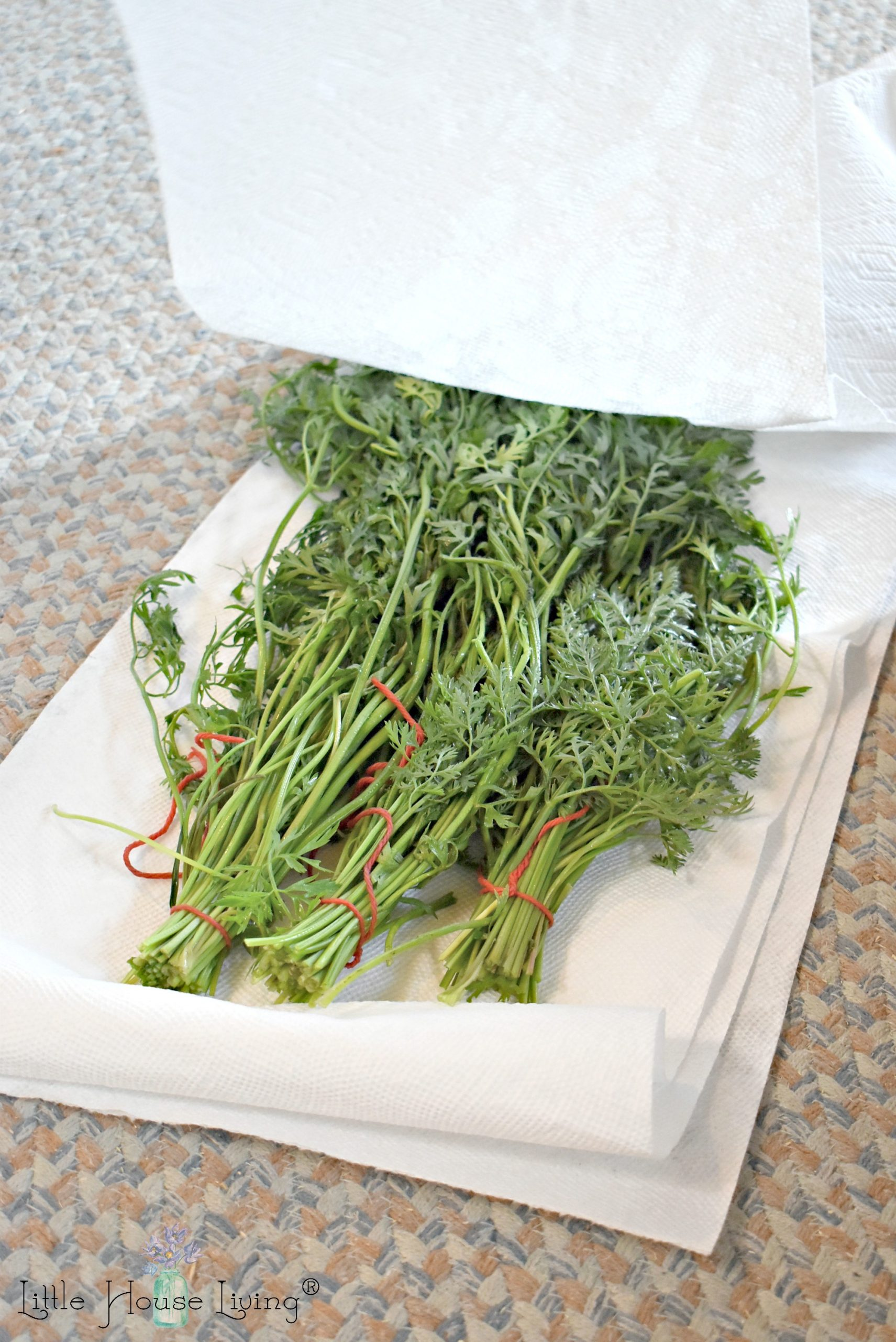 Drying Carrot Greens
