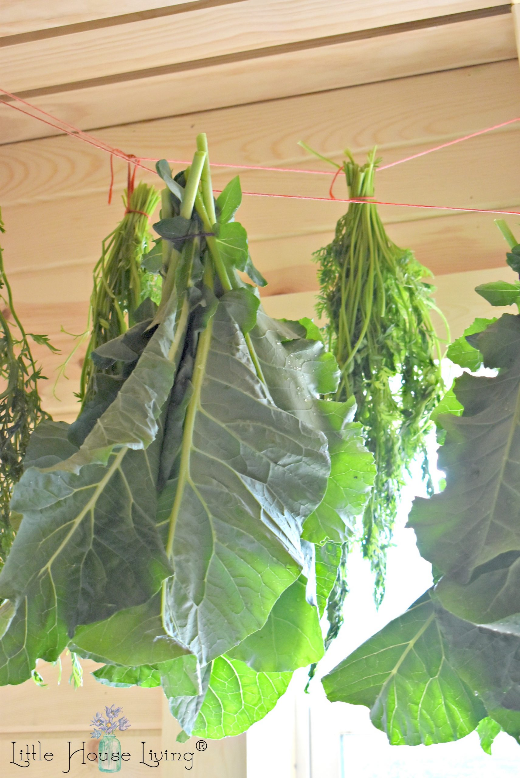 Hanging Broccoli Greens