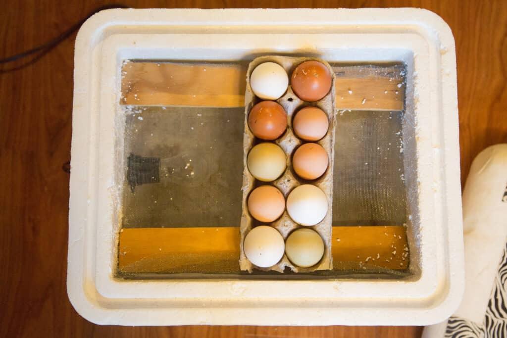 Eggs in Cooler