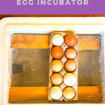 Ready to add some little ones to your homestead? Create your own DIY Egg Incubator and start hatching eggs with this tutorial!